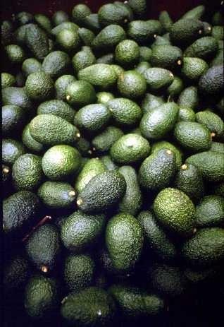 Hass Avocado01
