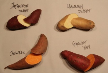 A variety of sweet potatoes from Earl's