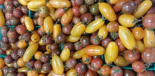 Artisan Cherry Tomatoes seasonal eats