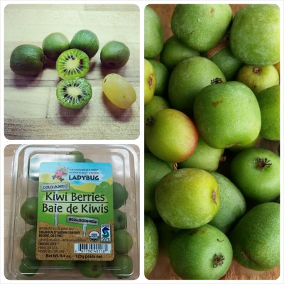Kiwi Berry photo grid
