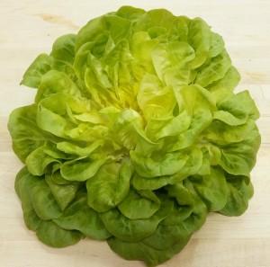 Green Salanova