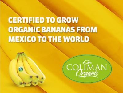 organic-bananas