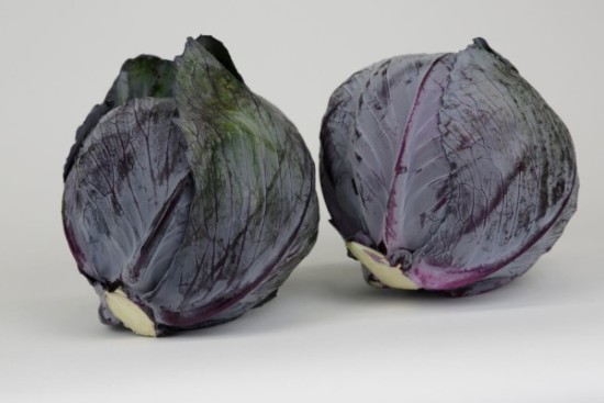 Red Cabbage double Josies