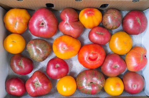 Tutti Frutti Heirloom Tomatoes June 15, 2017