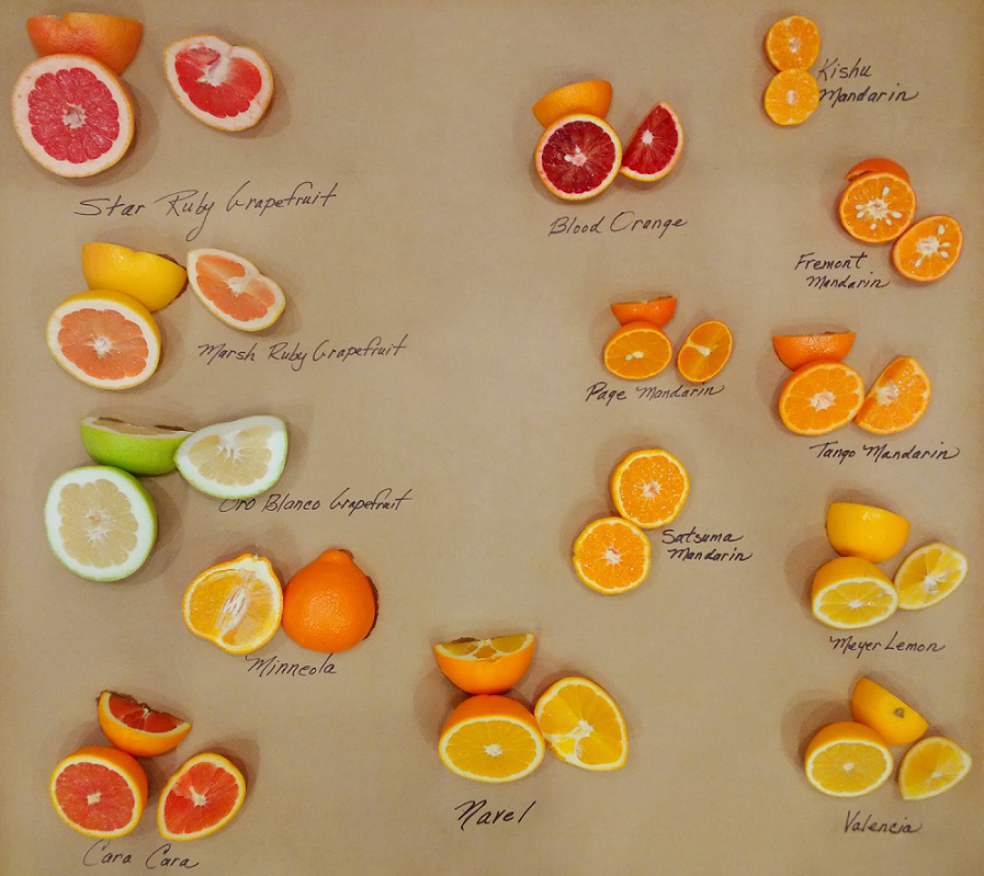 Winter Citrus Varieties EDIT