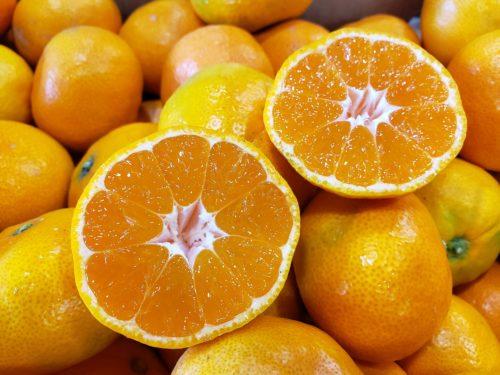 Side Hill Citrus Satsumas Cut