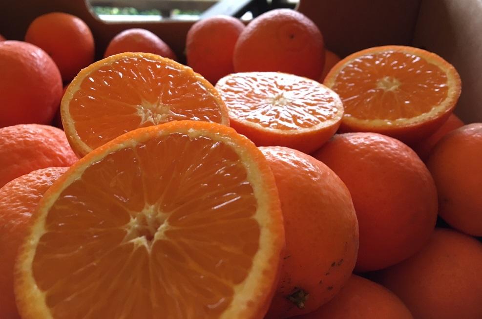 Page Mandarin Fruitworld (2)